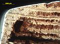 Blaettlingsbefall-an-querschnitt-fensterprofil-3.jpg