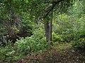 Bloomfield Provincial Park IMG 8159 (1849012766).jpg