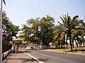 Boabab in Mahajanga - panoramio.jpg