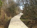 Board walk north of Ruan Pool - geograph.org.uk - 1761869.jpg