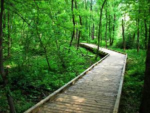 Lake Conestee Nature Park - Image: Boardwalk conestee park