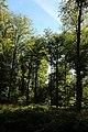 Bois de la Louvière - Livierenbos, Flobecq - Vloesberg 06.jpg