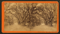 Bonaventure Cemetery, Savannah, from Robert N. Dennis collection of stereoscopic views 2.png