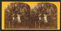 Bonaventure Cemetery, by Ryan, D. J., 1837- 4.png