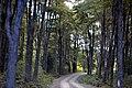 Bosque nativo en carretera austral - panoramio.jpg