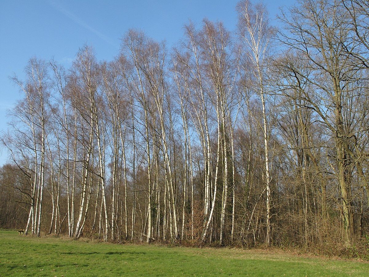 Bosquet wikip dia for Jardin wiktionnaire