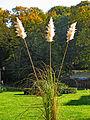 Botanička bašta Jevremovac, Beograd - jesenje boje, svetlost i senke 33.jpg