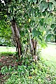 Botanic garden limbe30.jpg