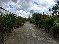 Botanische tuinen Utrecht 25.jpg