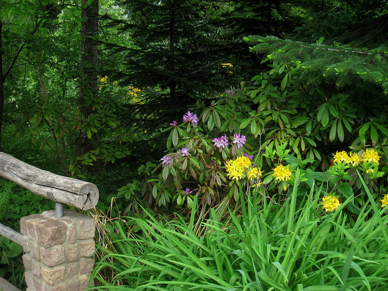 file botanischer garten berlin dahlem view img 8664. Black Bedroom Furniture Sets. Home Design Ideas