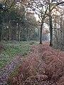 Botley Woods - geograph.org.uk - 89678.jpg