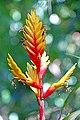 Brazil-01557 - Bromeliaceae (48994744528).jpg