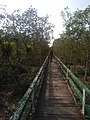 Bridge over deep Forest.jpg