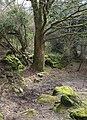 Bridleway, wall and tree, Lustleigh Cleave - geograph.org.uk - 742623.jpg