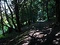 Bridleway in Ashford Hanger - geograph.org.uk - 955836.jpg
