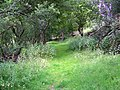 Bridleway near Pinn - geograph.org.uk - 1398236.jpg