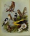 British birds - (20167780568).jpg