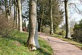 Broadclyst, Killerton Park - geograph.org.uk - 767795.jpg