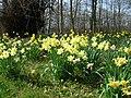 Brodie Castle Gardens - geograph.org.uk - 1275679.jpg