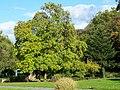 Burtscheider Kurpark - panoramio (1).jpg