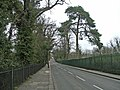 Bush Hill looking north, N21 - geograph.org.uk - 341691.jpg
