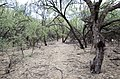 Butcher Jones Trail to Pinter's Point Loop, Tonto National Park, Saguaro Lake, Ft. McDowell, AZ - panoramio (75).jpg