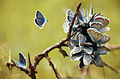Butterflies looks like flower.jpg