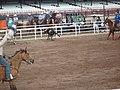 CFD Team Roping - Excellent capture of steer.jpg