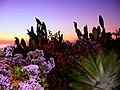 Cacti - panoramio.jpg