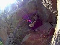 File:California condor (Gymnogyps californianus).webm