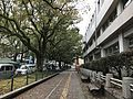 Camphor Avenue in front of Miyazaki Prefectural Government Headquarters 2.jpg