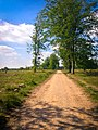 Cannock Chase Blue Route (37096638).jpeg