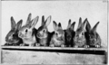 Care and Management of Rabbits 6.png
