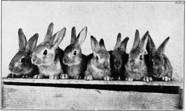 wikimedia creative commons license rabbits galore