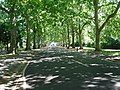 Carriage Drive North - geograph.org.uk - 1440477.jpg