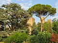 Castello dei Carraresi.jpg