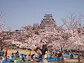 Castle Himeji sakura02 contrasted.jpg