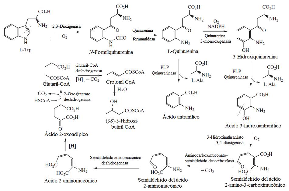 serotonina es un aminoacido