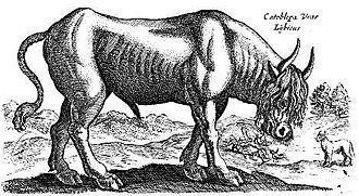 Catoblepas - Jan Jonston, Historia naturalis de quadrupedibus, Amsterdam 1614