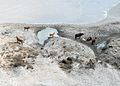 Cattle roam the countryside on the Bolivar Peninsula in the aftermath of Hurricane Ike at Galveston, Texas, Sept 080919-N-OW936-721.jpg