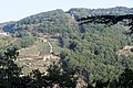Chantada - panoramio (10).jpg