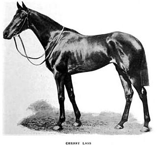 Cherry Lass British-bred Thoroughbred racehorse
