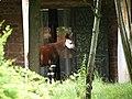 Chester Zoo (15306291792).jpg