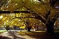 "Cincinnati - Spring Grove Cemetery & Arboretum ""Ceder Lake Area"" (6375091815).jpg"