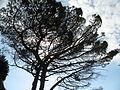 Cinque Terre-Via dell'Amore-2423.JPG