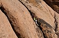 Climber (6586134255).jpg