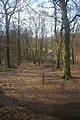 Coldfall Wood, Muswell Hill, London N10 - geograph.org.uk - 1742820.jpg