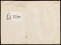 Coluber melanurus - 1700-1880 - Print - Iconographia Zoologica - Special Collections University of Amsterdam - UBA01 IZ12100226.tif