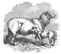 Coninck - Enfants et Animaux, 1885 - illustration p.32.png