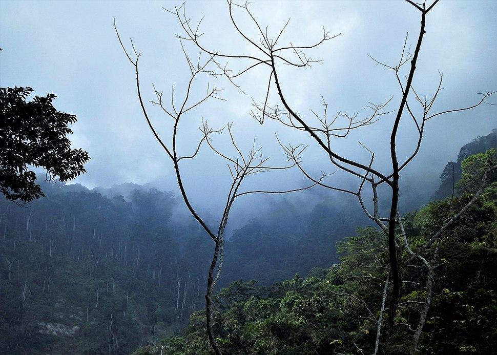 Cordillera de la costa, Selva tropical humeda - Parque NacIonal HenrI Pittier
